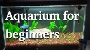 aquariums beginner