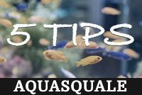 5 tips for aquarium