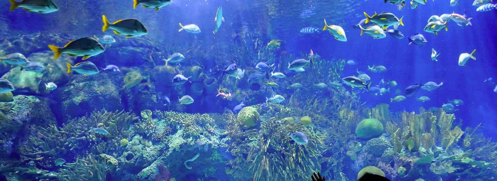 AquaSquale
